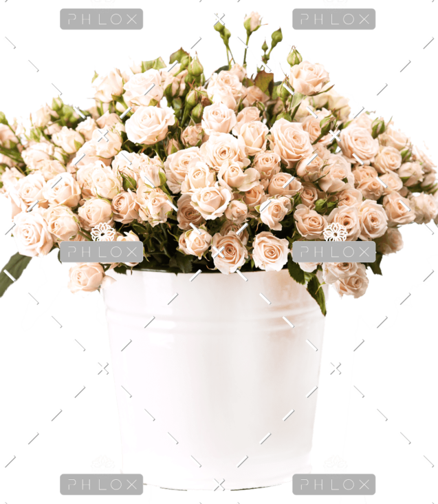 demo-attachment-157-bunch-of-creamy-roses-in-a-bucket-over-white-PLJ554Y-e1585206356671